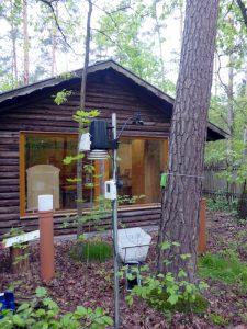 Waldkiefer, @Pinus_Tennenlohe | Baytreenet, FAU